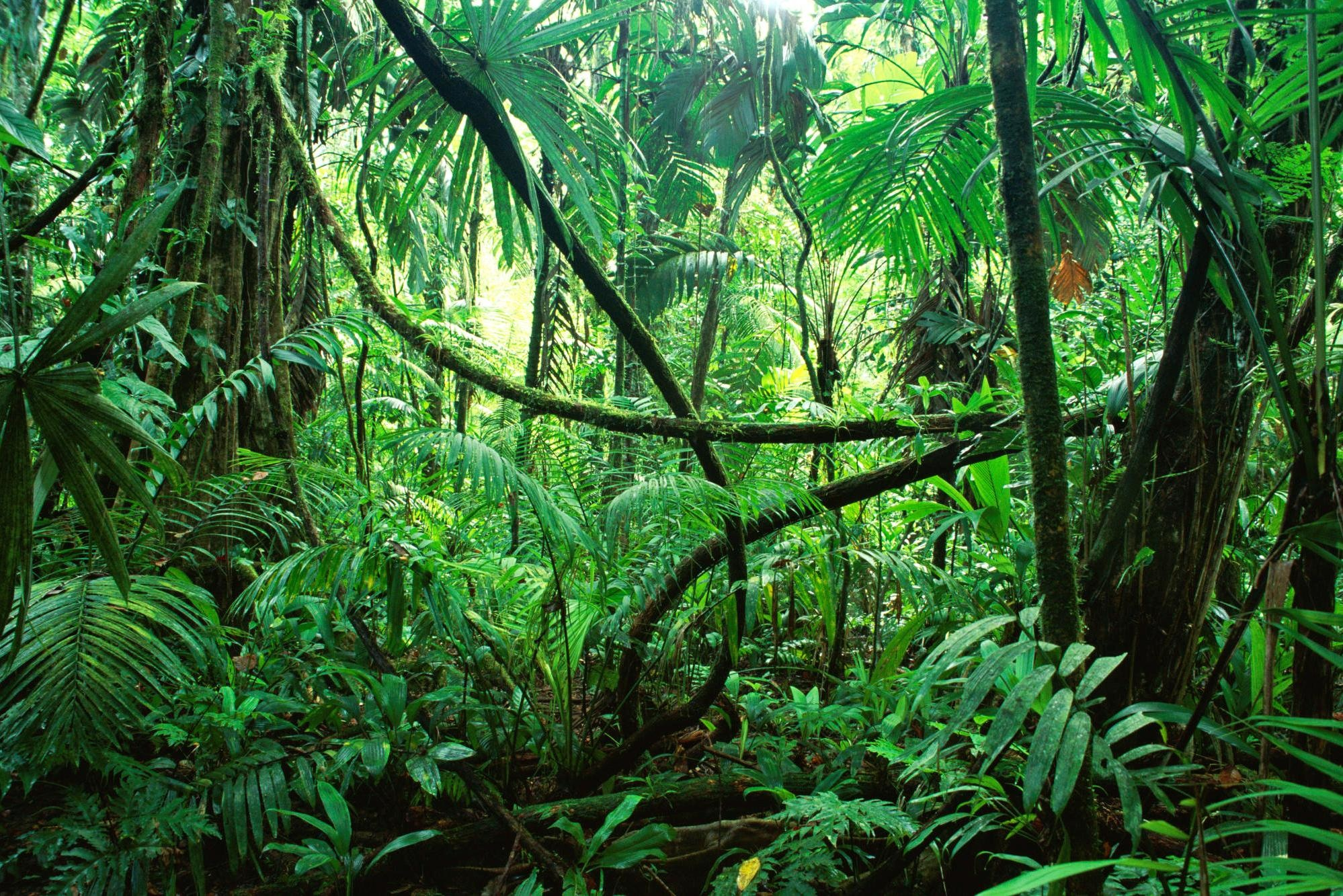 Sub Tropical Broad Leaved Forest